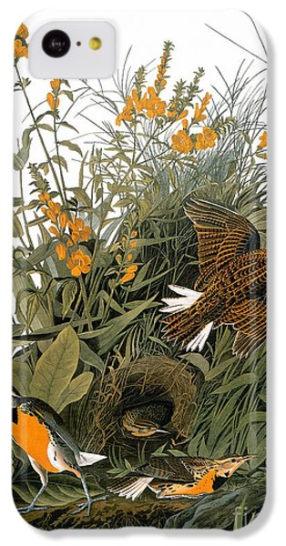 Audubon: Meadowlark IPhone 5c Case by Granger