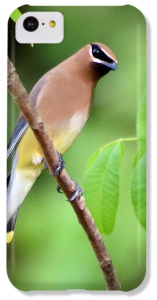Beautiful Cedar Wax Wing  IPhone 5c Case by Sheri McLeroy