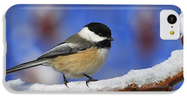 Black-capped Chickadee In Sumac IPhone 5c Case by Tony Beck