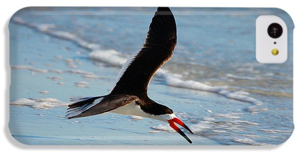 Black Skimmer IPhone 5c Case by Barbara Bowen