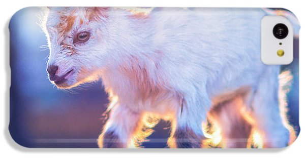 Little Baby Goat Sunset IPhone 5c Case by TC Morgan