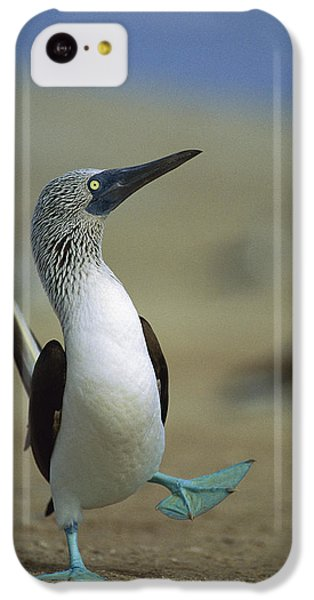 Blue-footed Booby Sula Nebouxii IPhone 5c Case by Tui De Roy