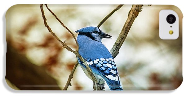 Blue Jay IPhone 5c Case by Robert Frederick