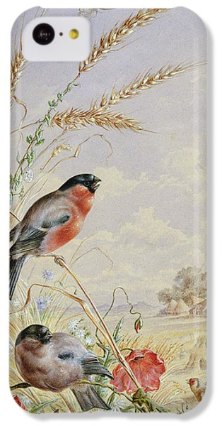 Bullfinches In A Harvest Field IPhone 5c Case by Harry Bright