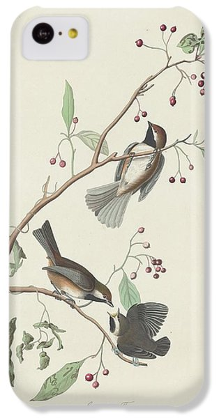 Canadian Titmouse IPhone 5c Case by John James Audubon