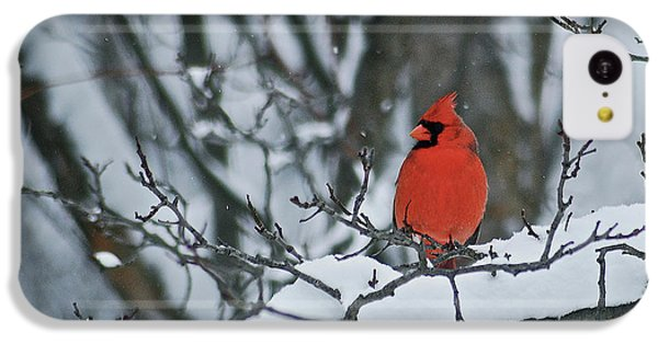 Cardinal And Snow IPhone 5c Case by Michael Peychich