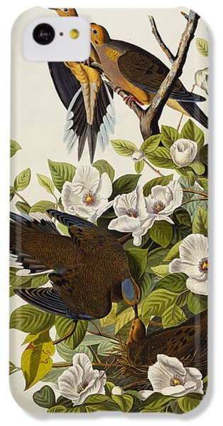 Carolina Turtledove IPhone 5c Case by John James Audubon