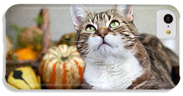 Cat And Pumpkins IPhone 5c Case by Nailia Schwarz