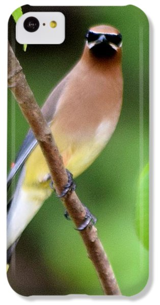 Cedar Wax Wing 2 IPhone 5c Case by Sheri McLeroy