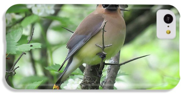 Cedar Wax Wing IPhone 5c Case by Alison Gimpel