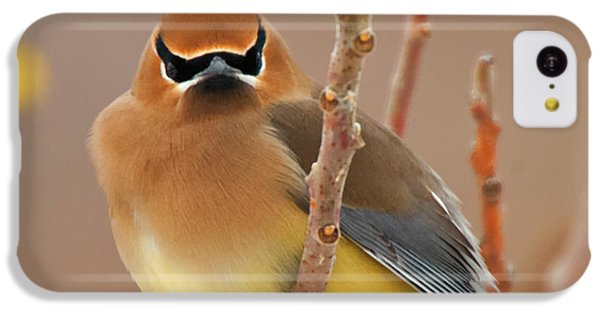 Cedar Wax Wing IPhone 5c Case by Carl Shaw