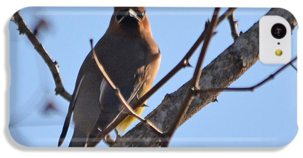 Cedar Wax Wing On The Lookout IPhone 5c Case by Barbara Dalton
