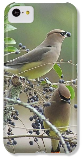 Cedar Wax Wings IPhone 5c Case by Lizi Beard-Ward