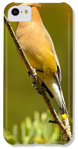 Cedar Waxwing IPhone 5c Case by Adam Jewell