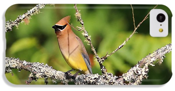 Cedar Waxwing  IPhone 5c Case by Carol R Montoya