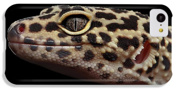 Close-up Leopard Gecko Eublepharis Macularius Isolated On Black Background IPhone 5c Case by Sergey Taran