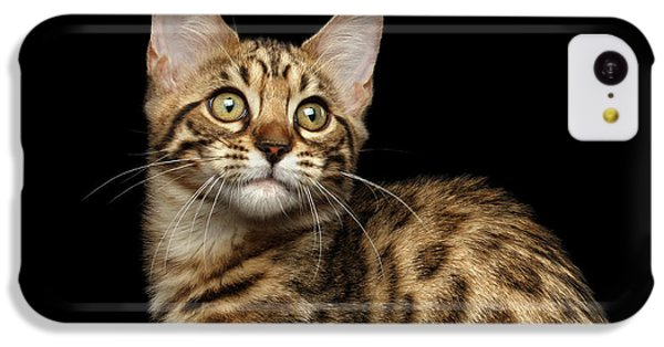 Closeup Bengal Kitty On Isolated Black Background IPhone 5c Case by Sergey Taran