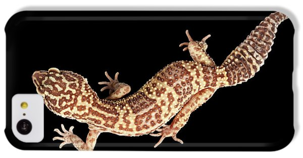 Closeup Leopard Gecko Eublepharis Macularius Isolated On Black Background IPhone 5c Case by Sergey Taran