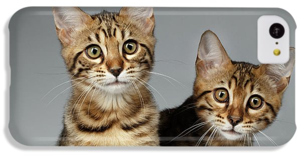 Closeup Portrait Of Two Bengal Kitten On White Background IPhone 5c Case by Sergey Taran