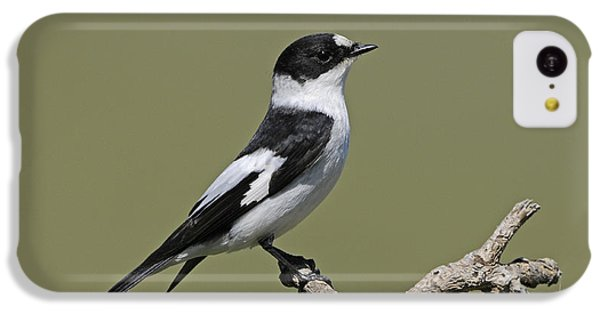 Collared Flycatcher IPhone 5c Case by Richard Brooks/FLPA