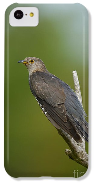 Common Cuckoo IPhone 5c Case by Steen Drozd Lund