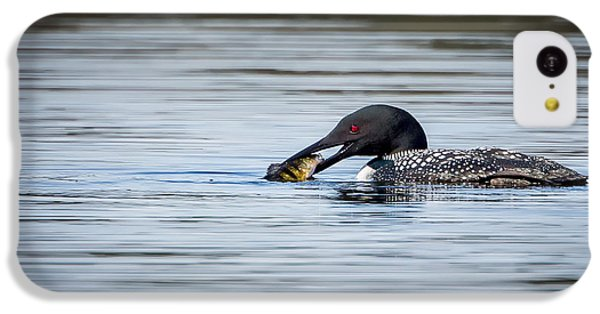 Common Loon IPhone 5c Case by Bill Wakeley