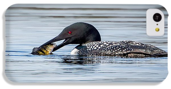 Common Loon Square IPhone 5c Case by Bill Wakeley