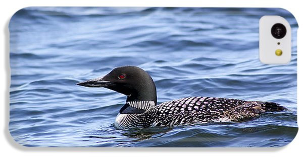 Common Loon IPhone 5c Case by Teresa Zieba