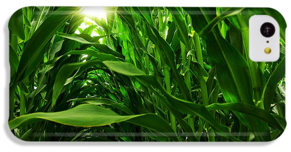 Corn Field IPhone 5c Case by Carlos Caetano