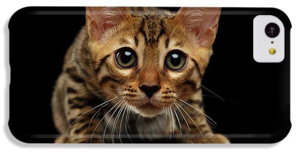 Crouching Bengal Kitty On Black  IPhone 5c Case by Sergey Taran