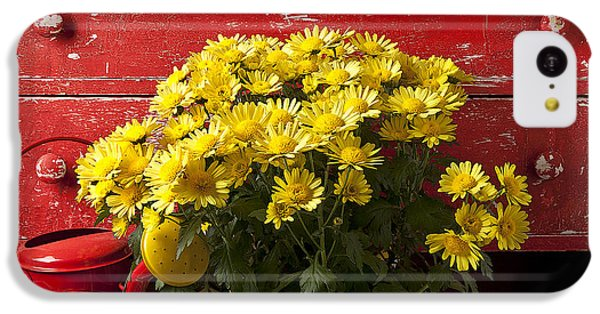 Daisy Plant In Drawers IPhone 5c Case by Garry Gay