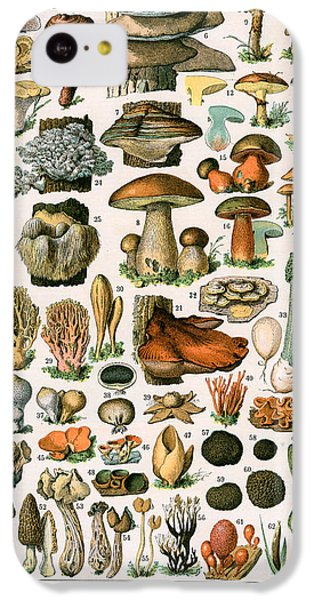 Decorative Print Of Champignons By Demoulin IPhone 5c Case by American School