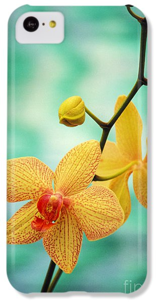 Dendrobium IPhone 5c Case by Allan Seiden - Printscapes