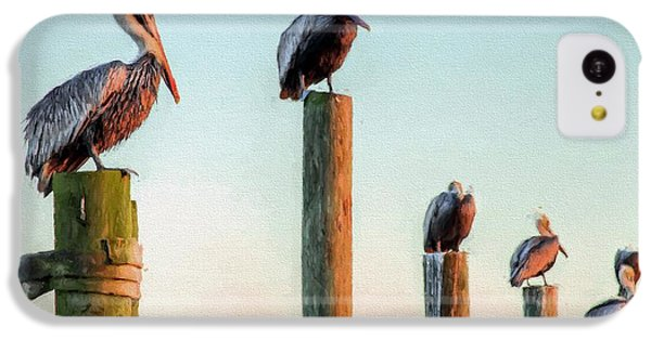 Destin Pelicans-the Peanut Gallery IPhone 5c Case by JC Findley