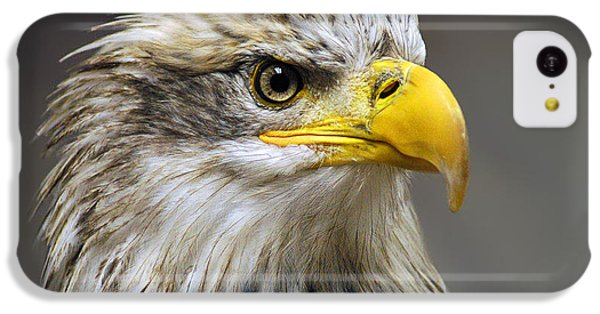 Eagle IPhone 5c Case by Harry Spitz