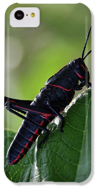 Eastern Lubber Grasshopper IPhone 5c Case by Richard Rizzo