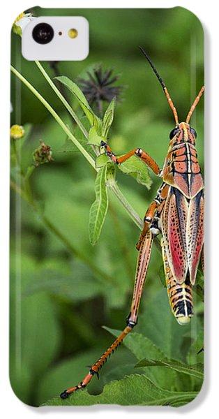 Eastern Lubber Grasshopper  IPhone 5c Case by Saija  Lehtonen