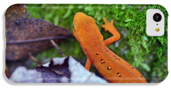 Eastern Newt IPhone 5c Case by David Rucker