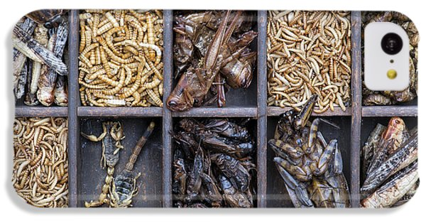 Edible Insects IPhone 5c Case by Tim Gainey