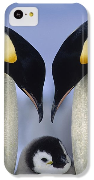 Emperor Penguin Family IPhone 5c Case by Tui De Roy