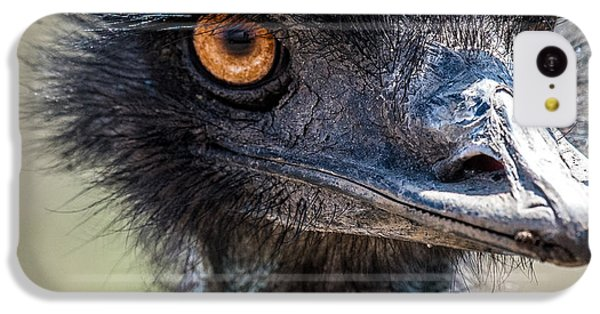 Emu Eyes IPhone 5c Case by Paul Freidlund