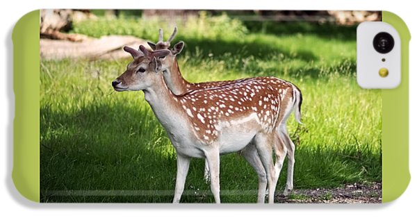 Fallow Deer In Richmond Park IPhone 5c Case by Rona Black