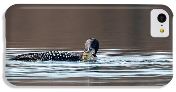 Feeding Common Loon IPhone 5c Case by Bill Wakeley