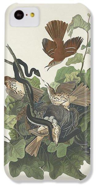 Ferruginous Thrush IPhone 5c Case by John James Audubon