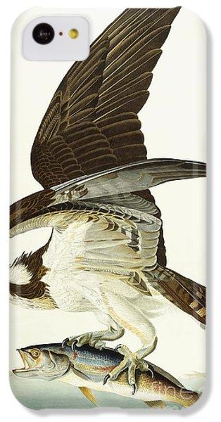 Fish Hawk IPhone 5c Case by John James Audubon