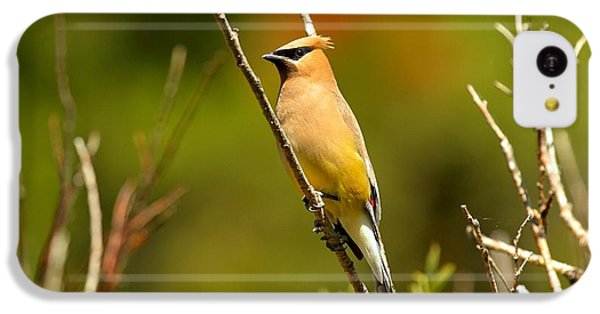 Fishercap Cedar Waxwing IPhone 5c Case by Adam Jewell
