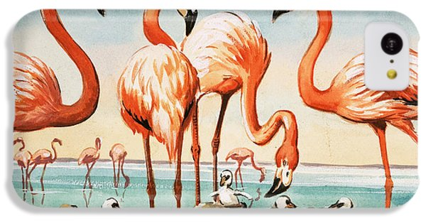Flamingoes IPhone 5c Case by English School