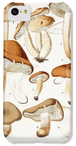 Fungi IPhone 5c Case by Jean-Baptiste Barla