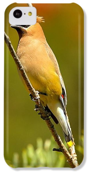 Glacier Cedar Waxwing IPhone 5c Case by Adam Jewell