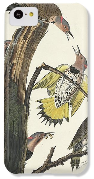 Gold-winged Woodpecker IPhone 5c Case by John James Audubon